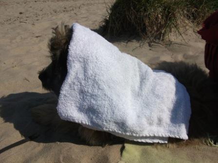 Gos d`Atura Blümchen: Hund und Sonnenschutz